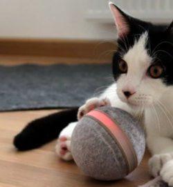 DIIBRA Wicked Ball | interaktives Katzenspielzeug | Katzenspielzeug Ball
