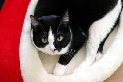 Smniao Weihnachten Katzenbett | Bettchen Zipfelmütze