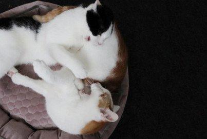 Wochenende mit Katzen Beitragsbild