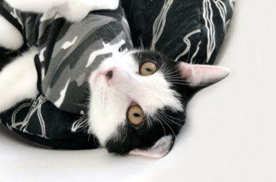 Katze & Kastration