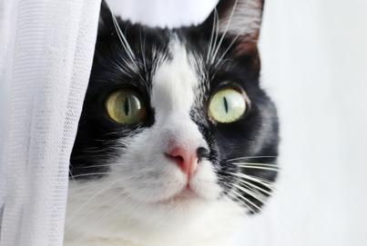 Katzengeschichten | Geschichten über Katzen