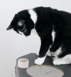 Katzenspielzeug_DIY_Beitragsbild