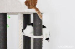 TRIXIE Kratzbaum XXL Tomás | Kratzbaum große Katze | schwere Katzen