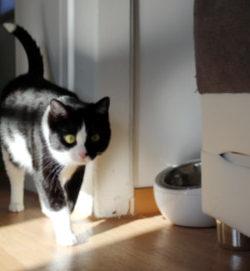 Leben_mit_Katzen Beitragsbild