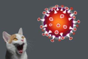 Corona & Katzen: Keine Panik, aber Vorsicht