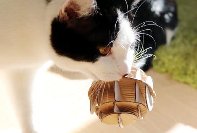 DIY Katzenspielzeug Pappe | Ball Pappe Lifehack | Spielball Katzen