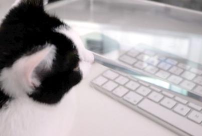 Katzen und Tastaturen