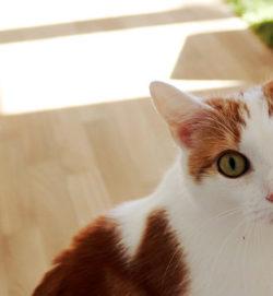 Beitragsbild Mycoplasmen Katzen