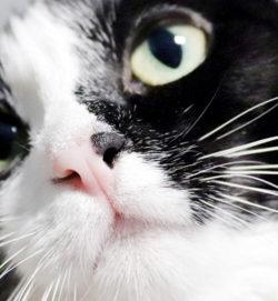 Beitragsbild Transportbox Katze