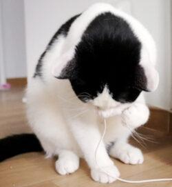 Beitragsbild Katze knabbert an Kabel