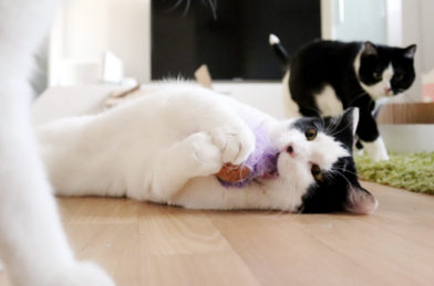 Katzenspielzeug KONG Cat Active Cork Ball