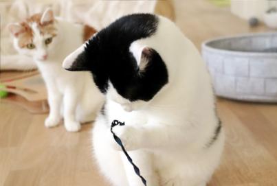 TRIXIE Wiggle & Fumble Katzenspiel
