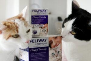 Pheromone = Katzen Botschaften