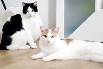 Unterschiede bei der Katzenzusammenführung