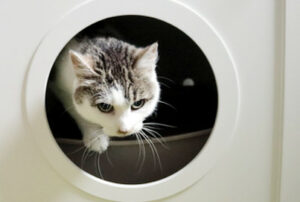 Haus für Katzentoilette